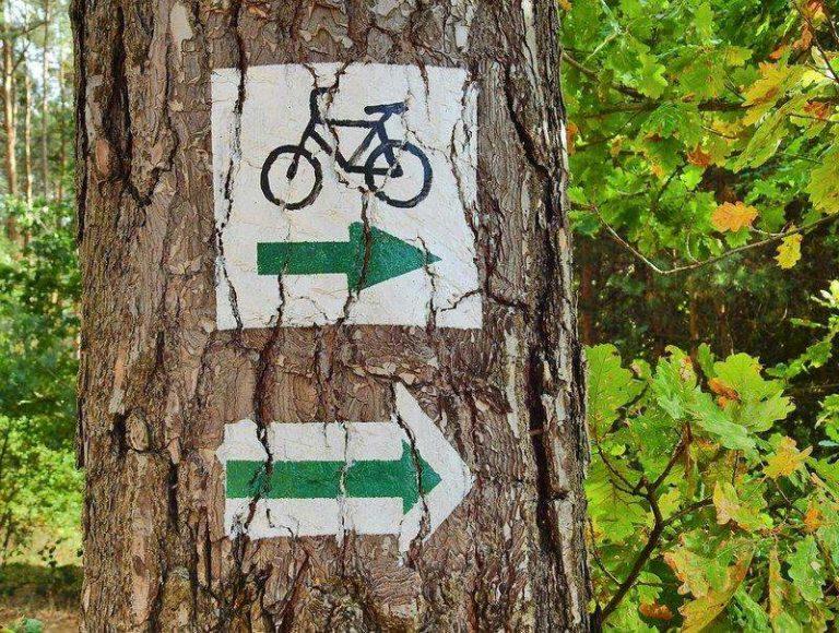 Drzewko oznaczone znakiem trasy rowerowej